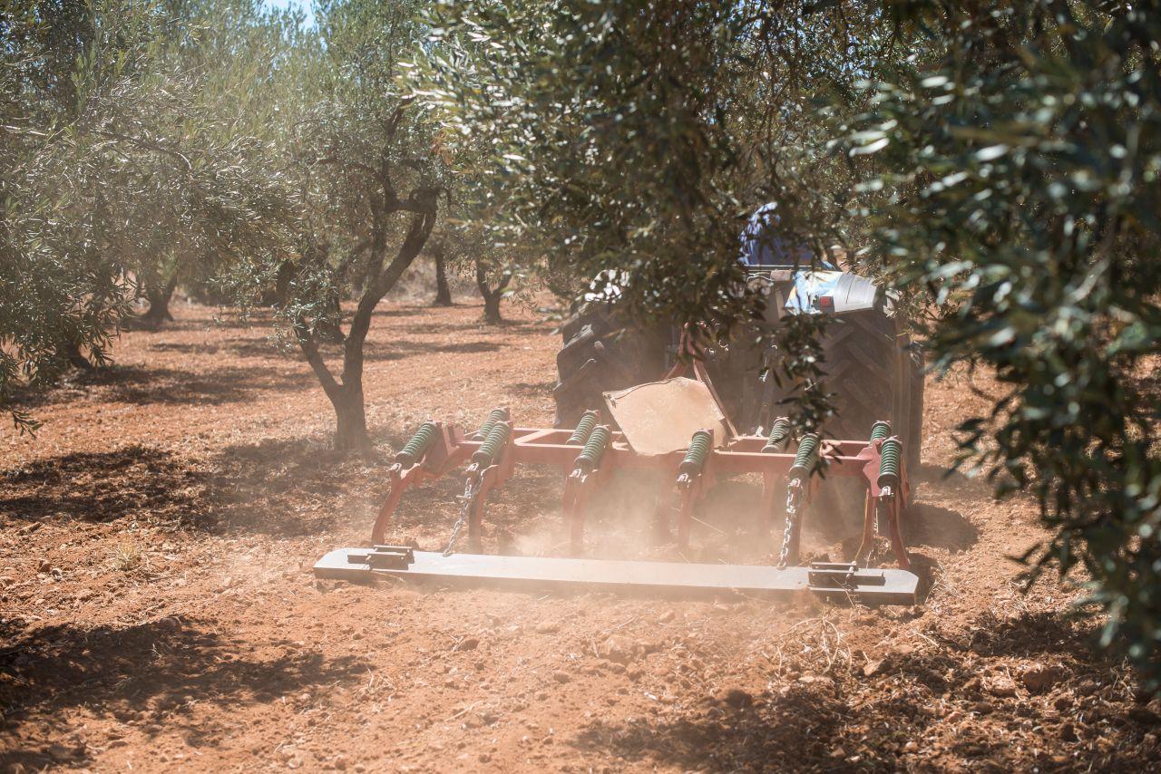 Traktor der Land beackert zwischen Olivenbäumen